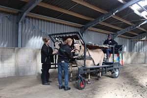 Huifbed met paarden - Stichting Hart in Friesland